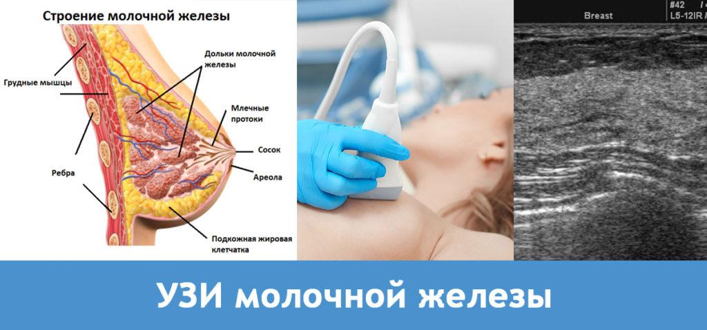 УЗИ молочной железы подольск